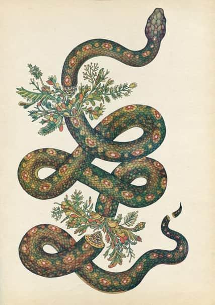 Змея и цветок