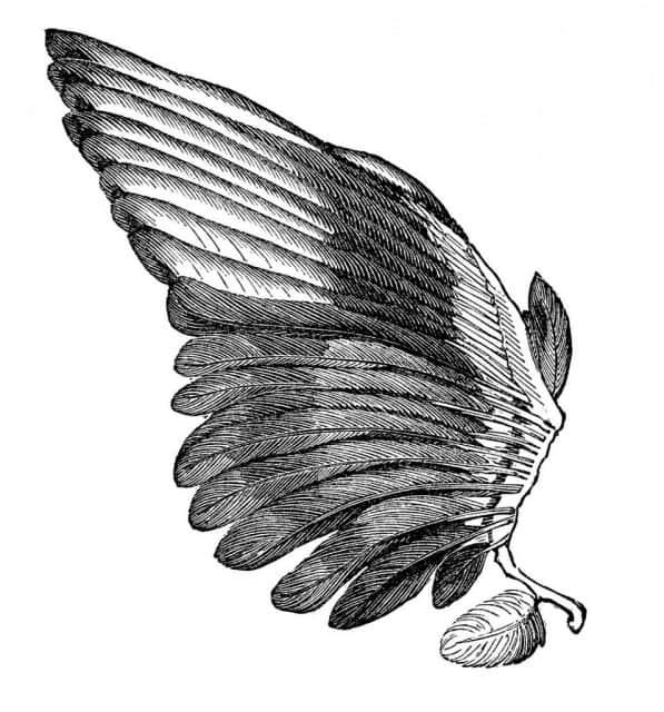 картинки тату крылья