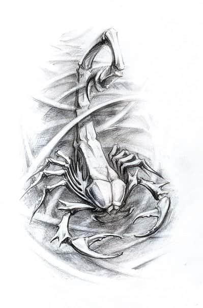 Изображение скорпиона картинки