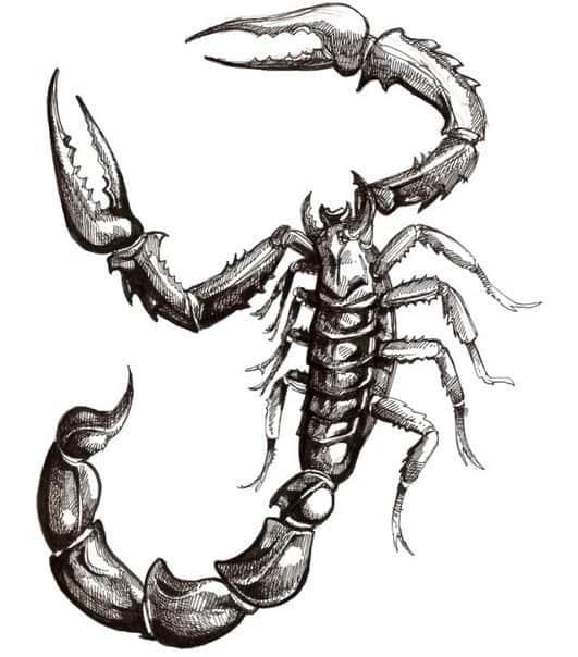картинки татуировки скорпиона