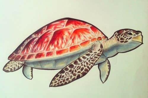 эскиз тату черепахи