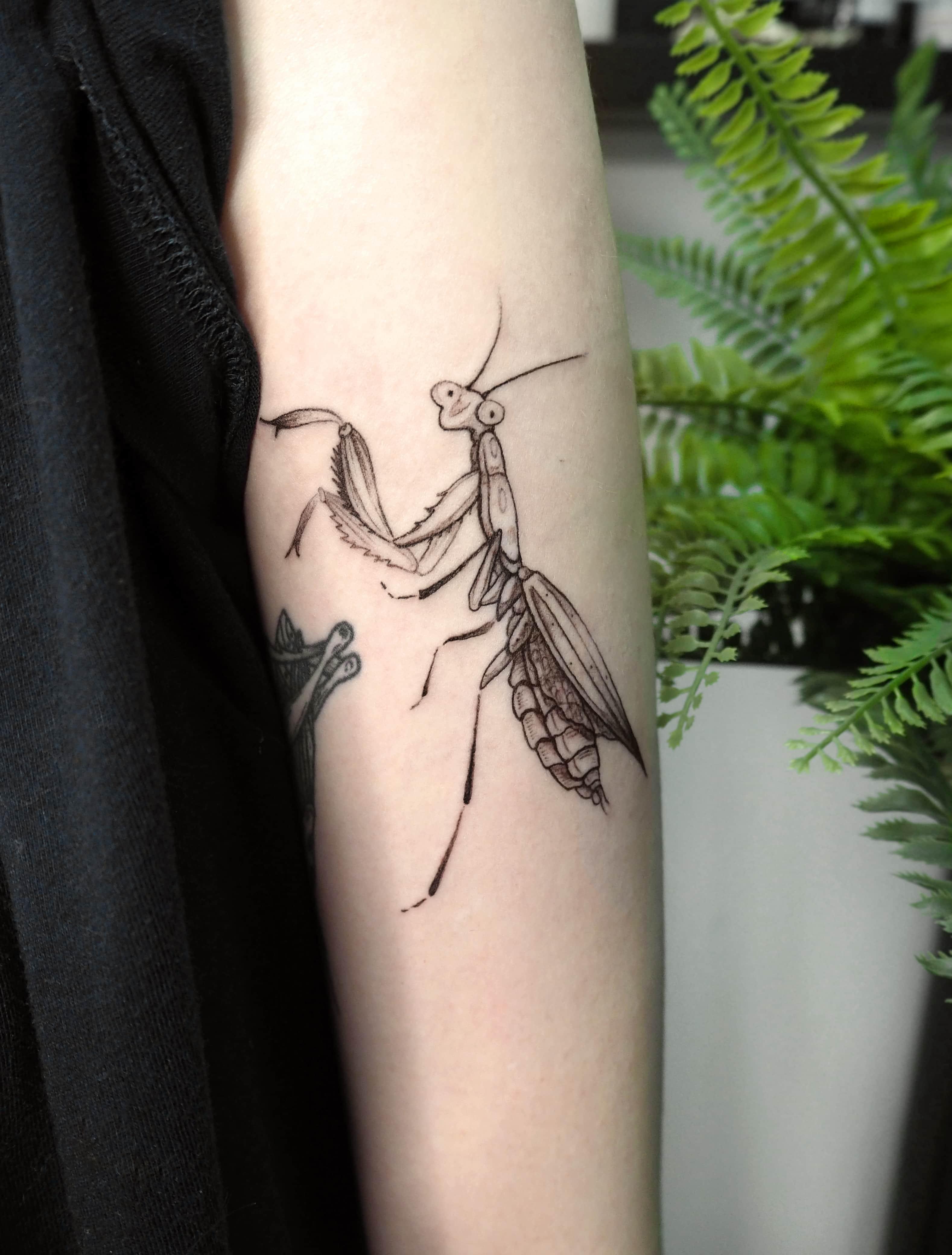 Тату насекомое на предплечье